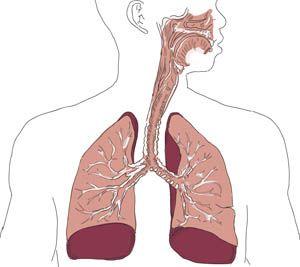 Ny lungemodell skal øke vår viten om partiklers effekt | Renholdsnytt
