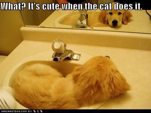 To cute!