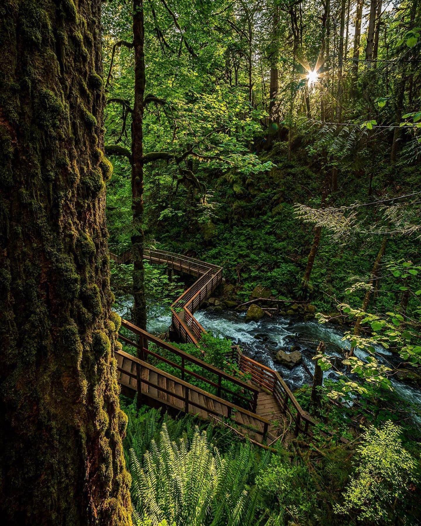 Repost  @pnw.adventures.82  Into the forrest i go to lose my mind and find my soul! ----- John Muir . . . . . . . . #johnmuir #pnwphotographer #explore #hiking #pnwadventures #wanderlust #exploreoregon #pacificnorthwest #mcdowellcreek #oregonlife #oregonexplored #nikon #d750 #nikonusa #nikonphotography #igaddict #ig_moods #oregonforrest #mothernature