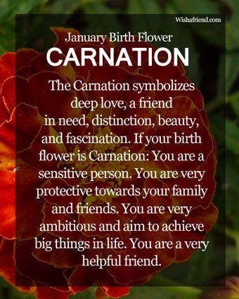 Carnation Tattoo On Pinterest  January Birth Flowers Aster