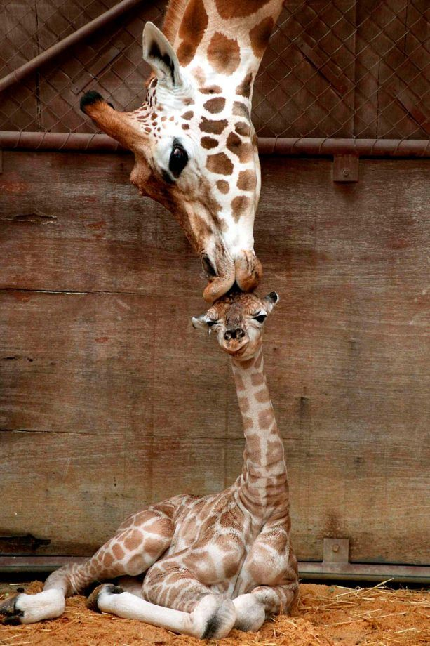 Cute Mother and Baby Animal Pics #cutecreatures