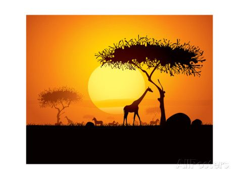 Tranquil Sunset Scene In Africa Silhouette Animals And Trees In