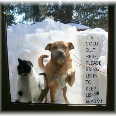 Please Bring Dogs Inside During Cold Weather Don T Leave Them Out