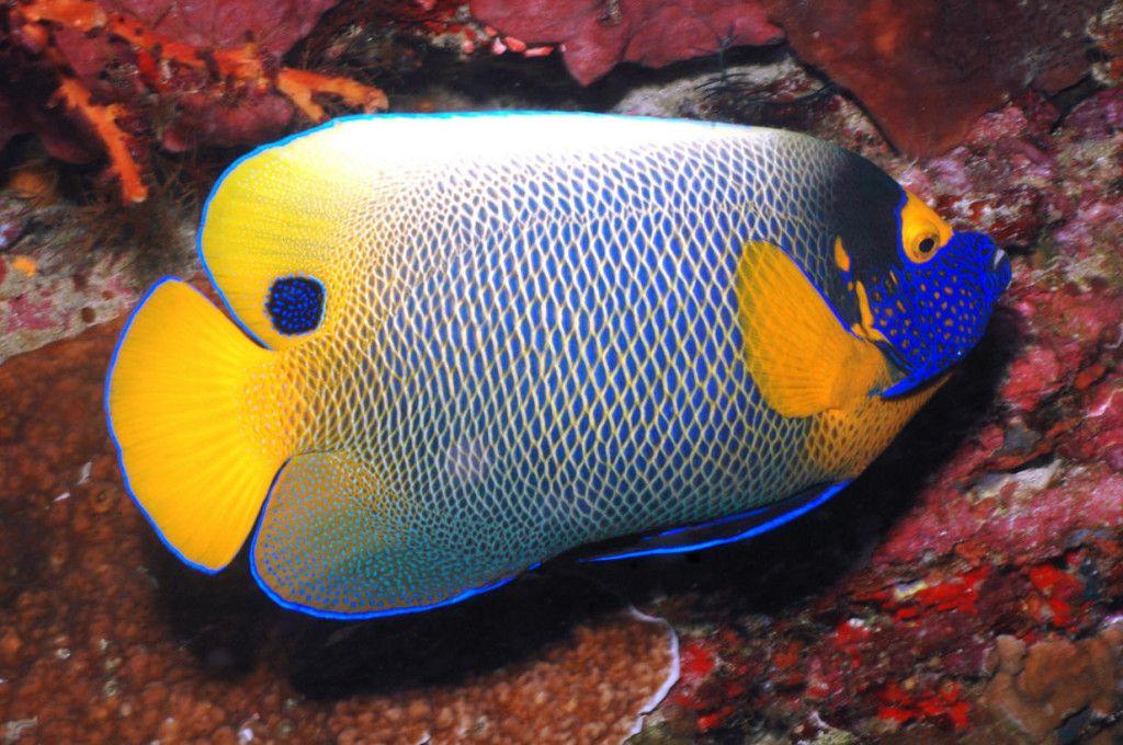 Cool Salt Water Aquarium Fish Picture Live Tropical Fish Aquarium Fish Tropical Fish Saltwater Aquarium