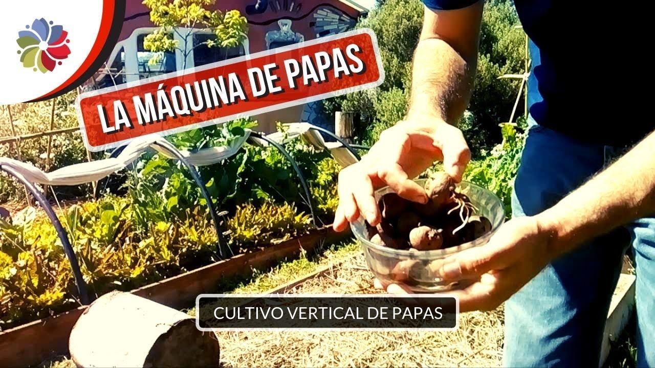 La Maquina De Hacer Papas Cultivo Vertical En Balcones Patios Y Terrazas Youtube En 2020 Cultivos Verticales Cultivo De Papas Patios De Recreo