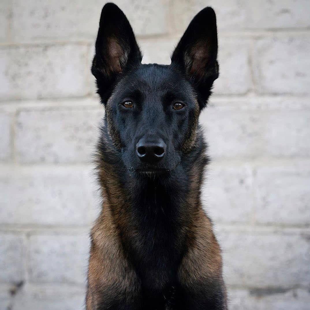 Pin Taulussa Dogs