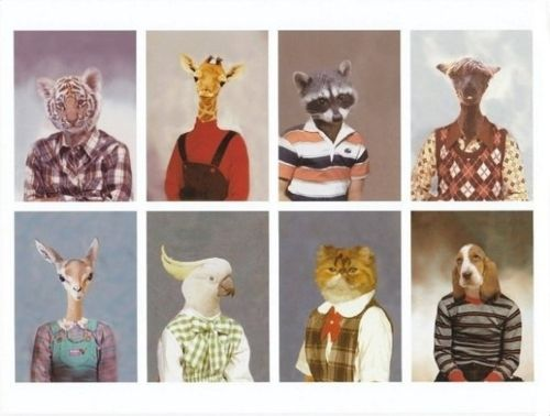 animal yearbook