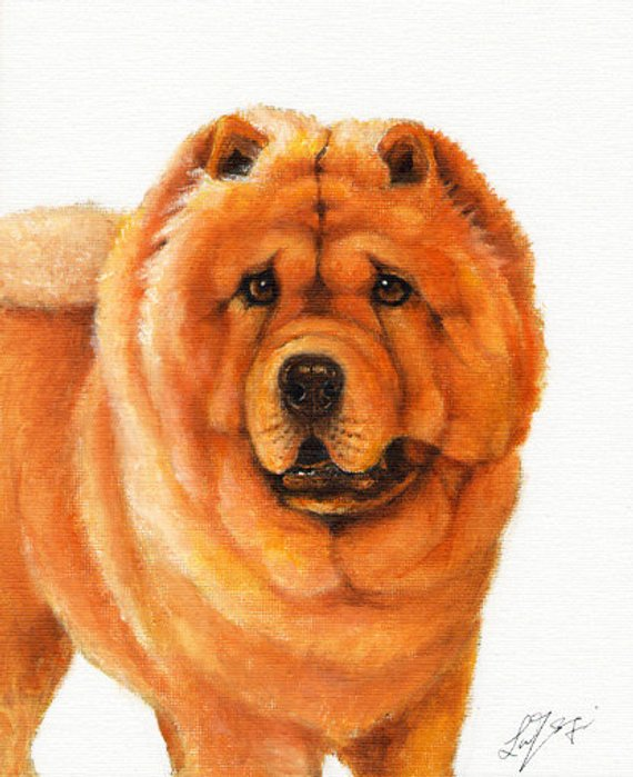 Original Dog Oil Portrait Painting Chow Chow Artwork From Artist
