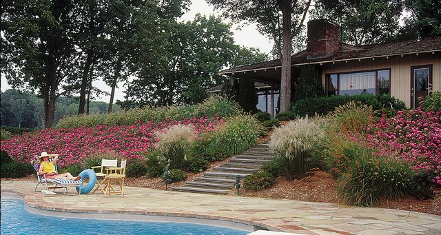 Flower carpet pink roses on slope by pool gardens shrub and plants flower carpet groundcover roses by pool next generation pink supreme mightylinksfo