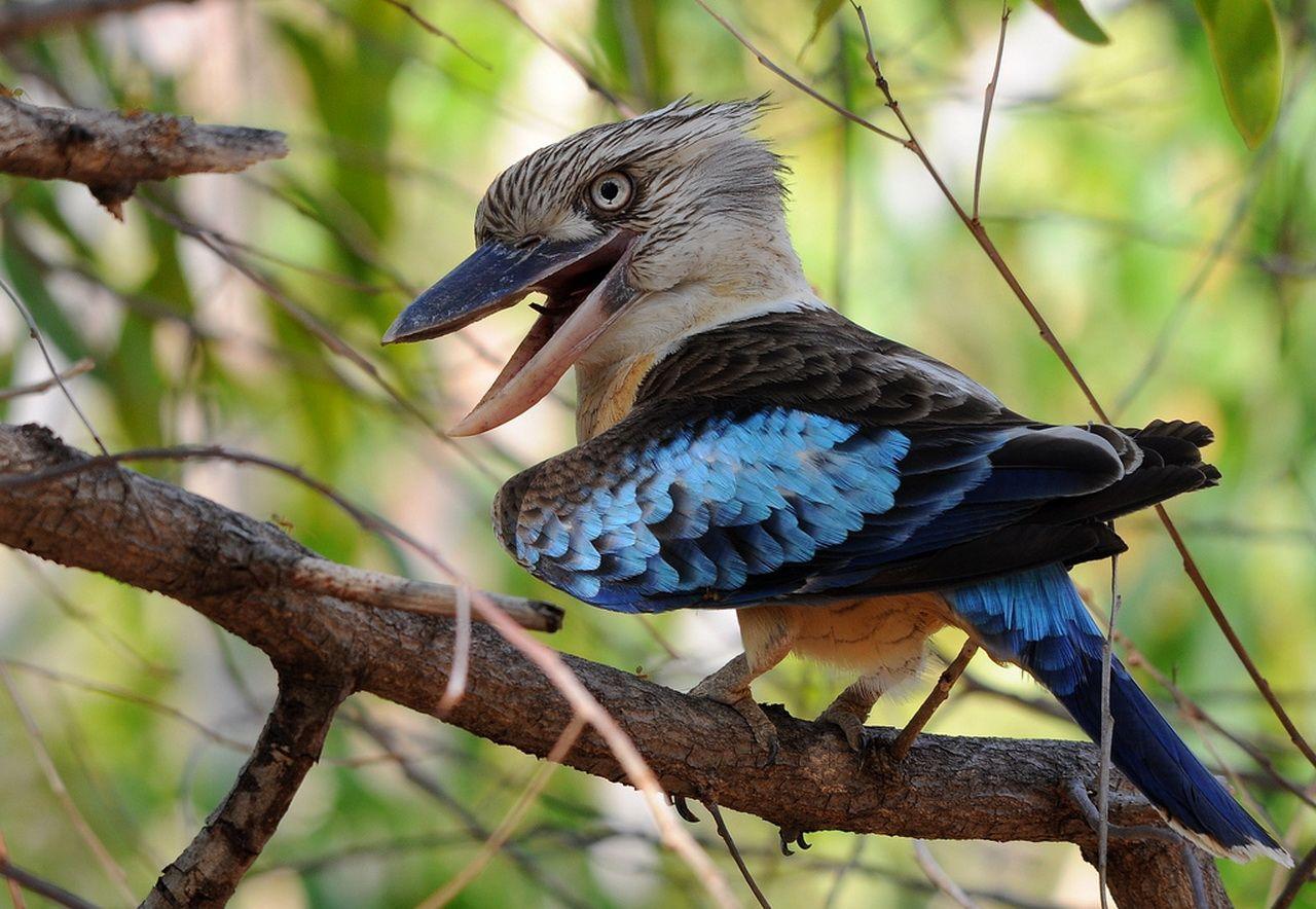Bobble Head Bird