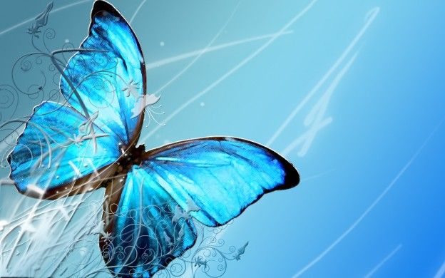 Beautiful Butterfly Wallpapers Hd Pictures One Hd Wallpaper
