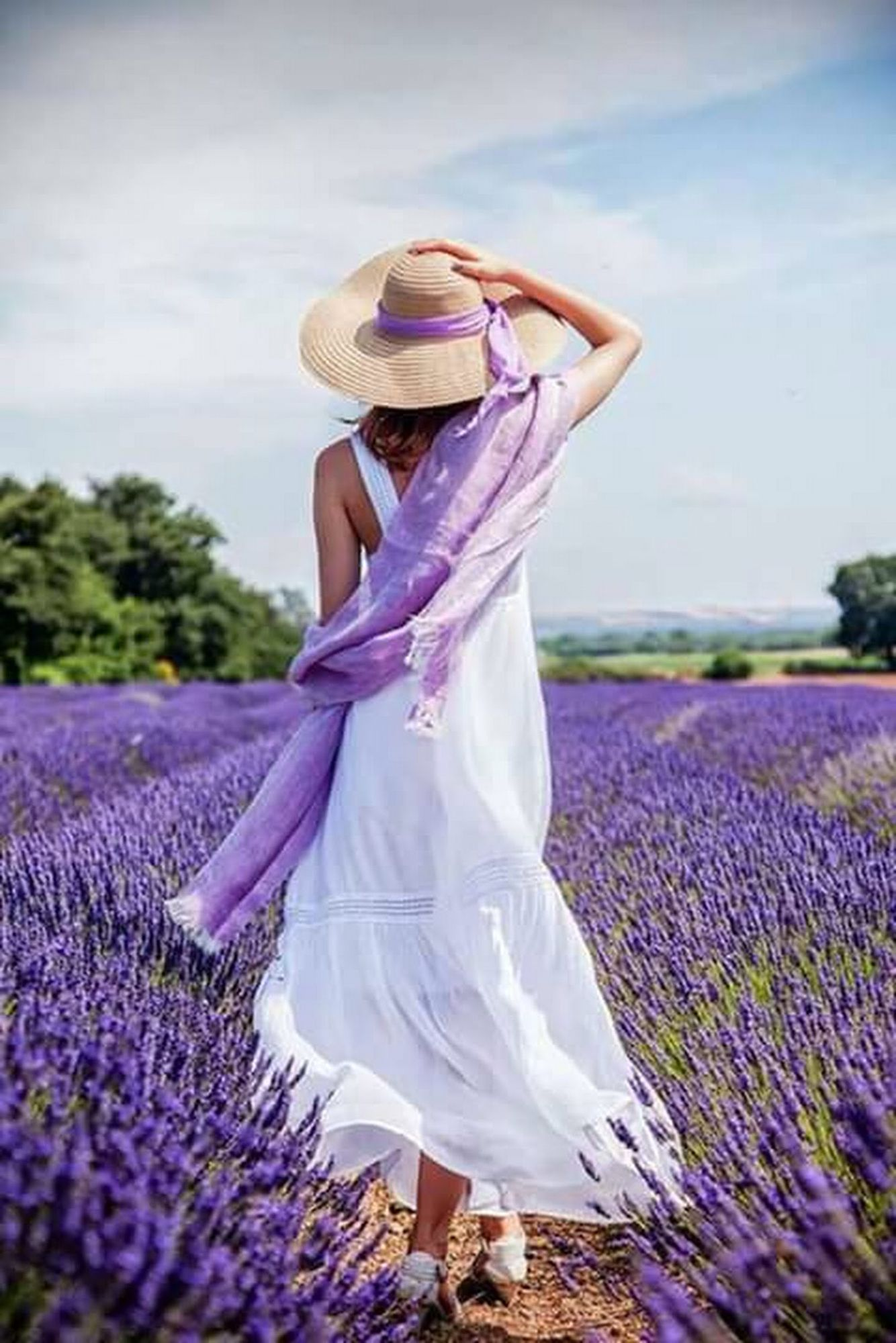 Pin By Levondas Artistic Dreams2 On Lavender Fields Pinterest
