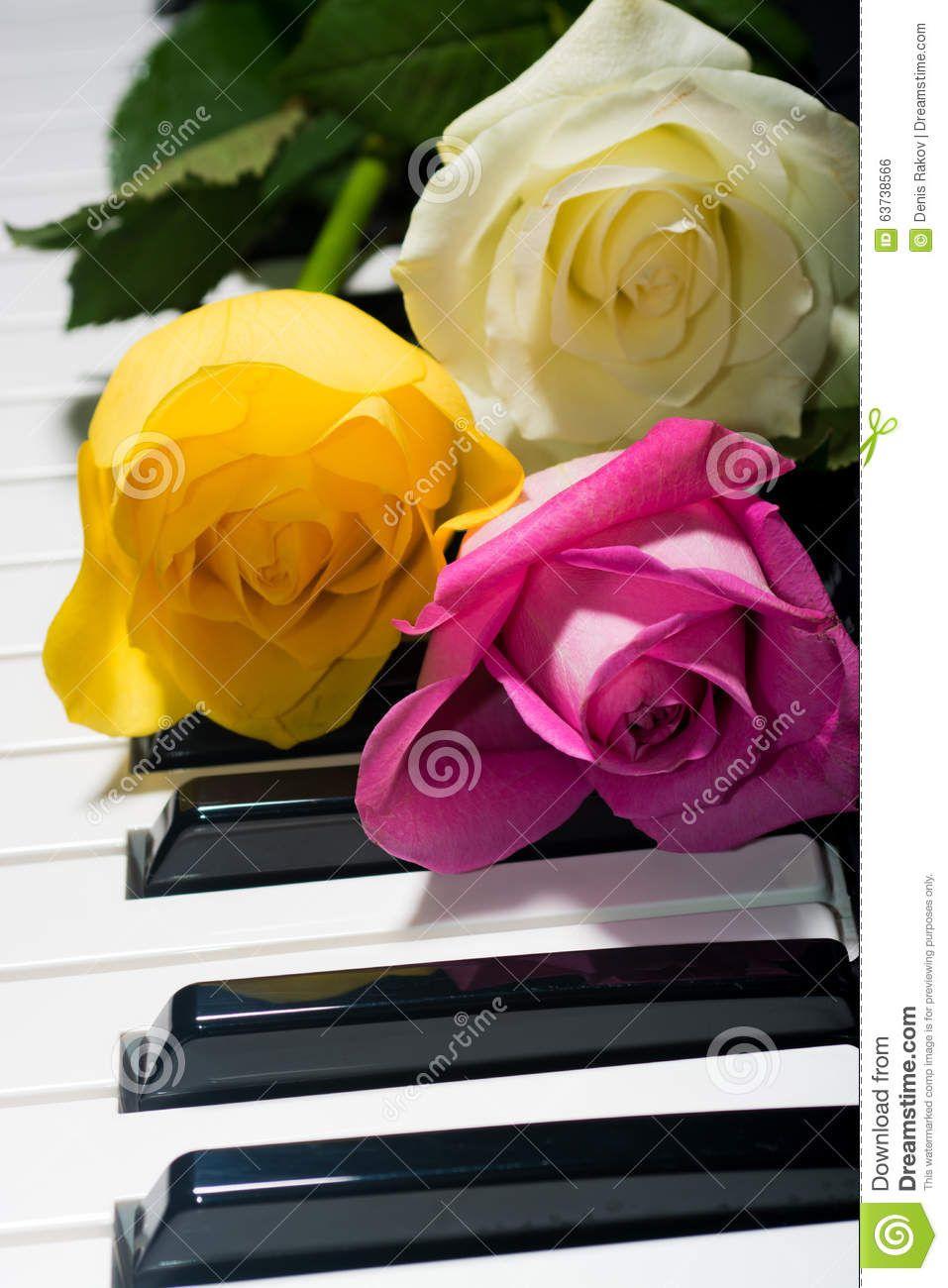 κίτρινος-ρό-ινος-τριαντάφυ-α-τσαγιού-στο-γραπτό-πιάνο-63738566.jpg (957×1300)