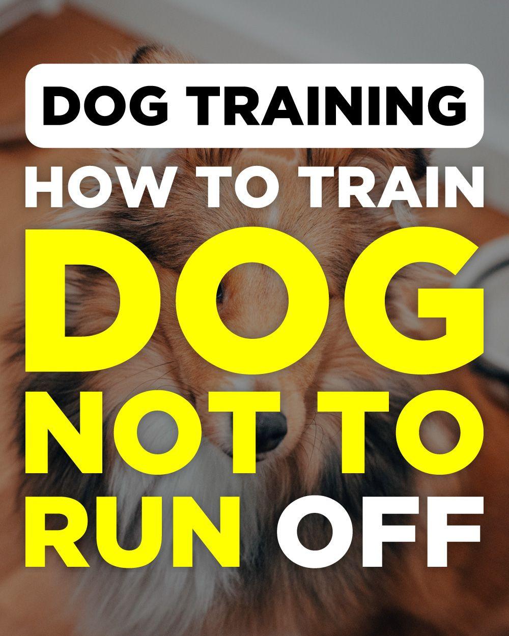 Brain Training For Dogs Review Dog training, Bird dog