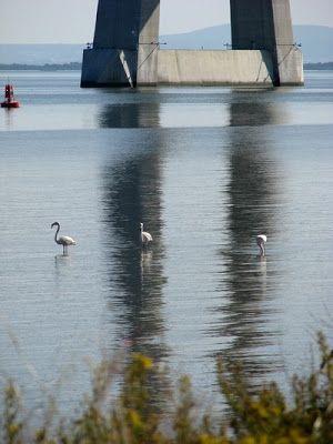 Imagens e Poemas: 294 - Flamingos no Tejo