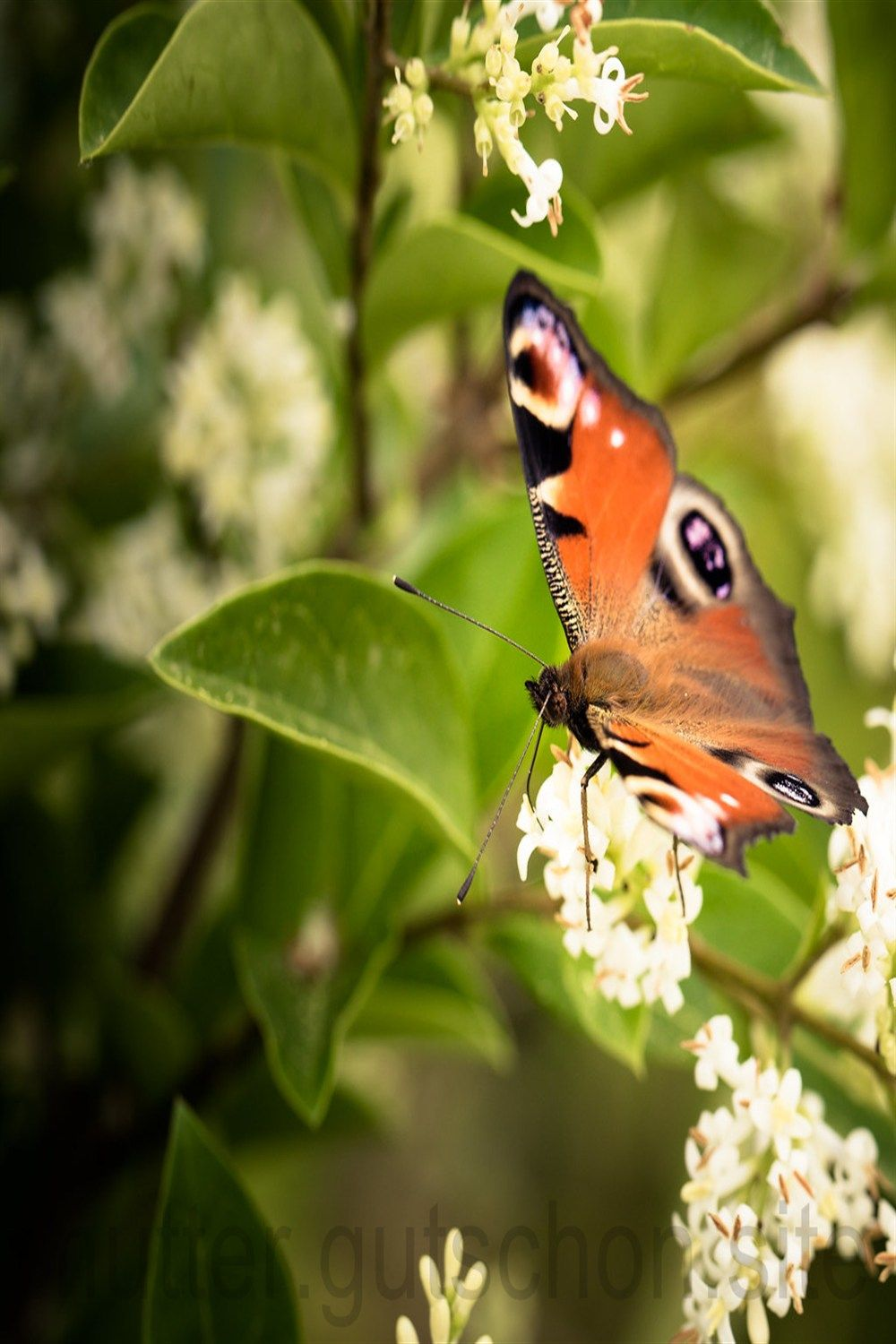 lebensmittel i am anfang Life, Butterfly, Insects