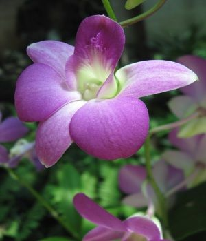 Purple Flower Names Enlisted With A Beautiful Photo Gallery Dendrobium Orchids Care Orchid Care Orchid Varieties