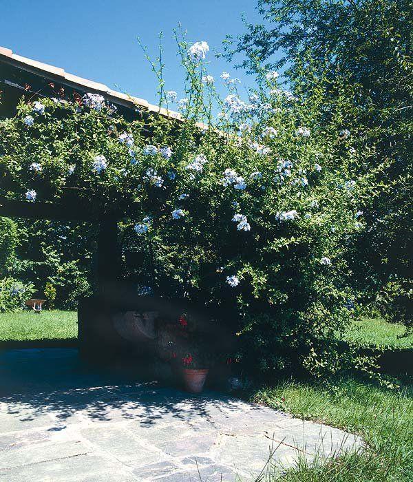 Crea sombra en el jardín