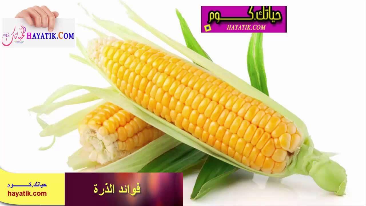 تعرفى على فوائد الذرة فوائد الذرة الصفراء فوائد الذرة المسلوقة Corn Sweet Corn Corn Plant