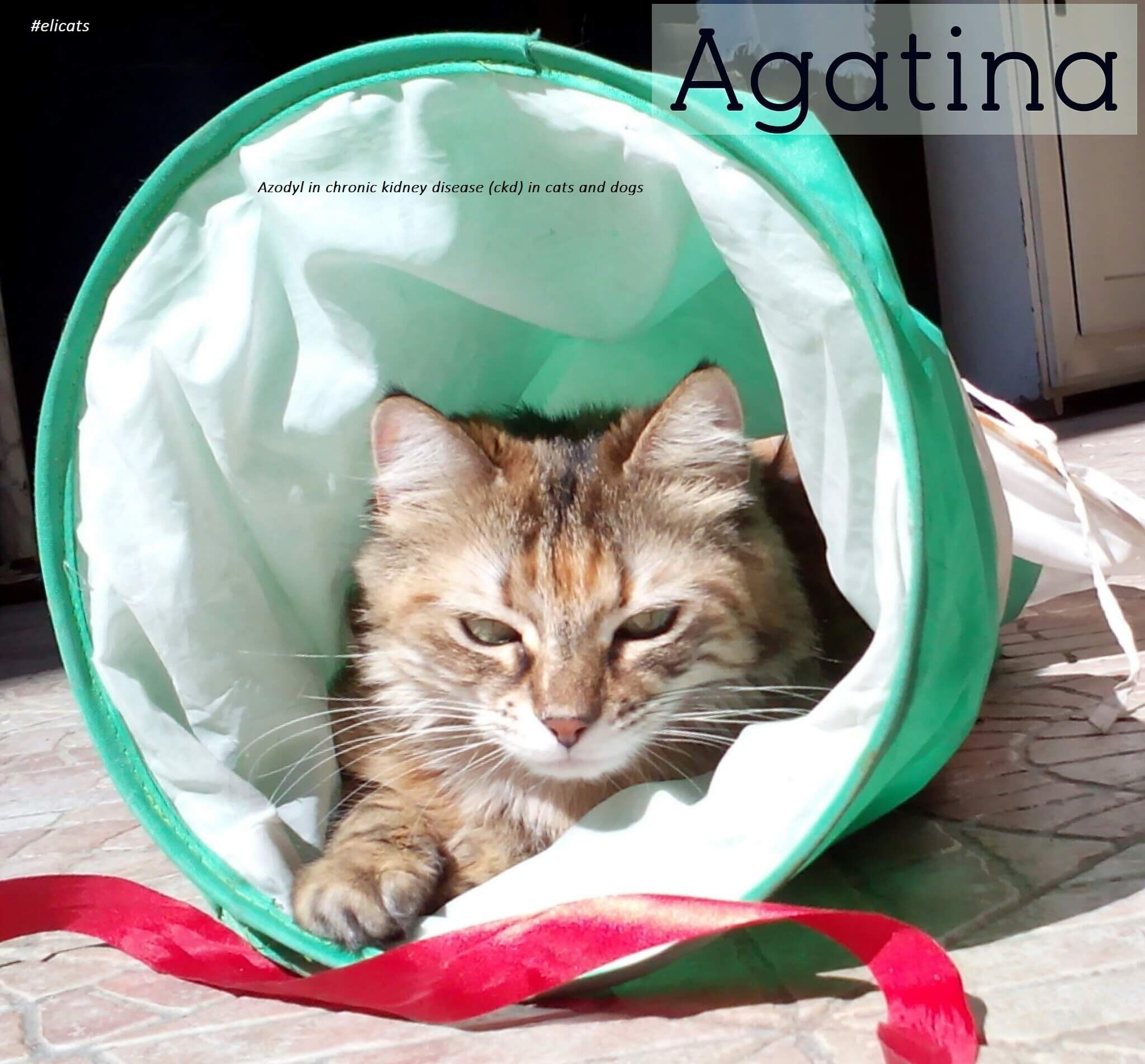 Azodyl in chronic kidney disease (ckd) in cats and dogs
