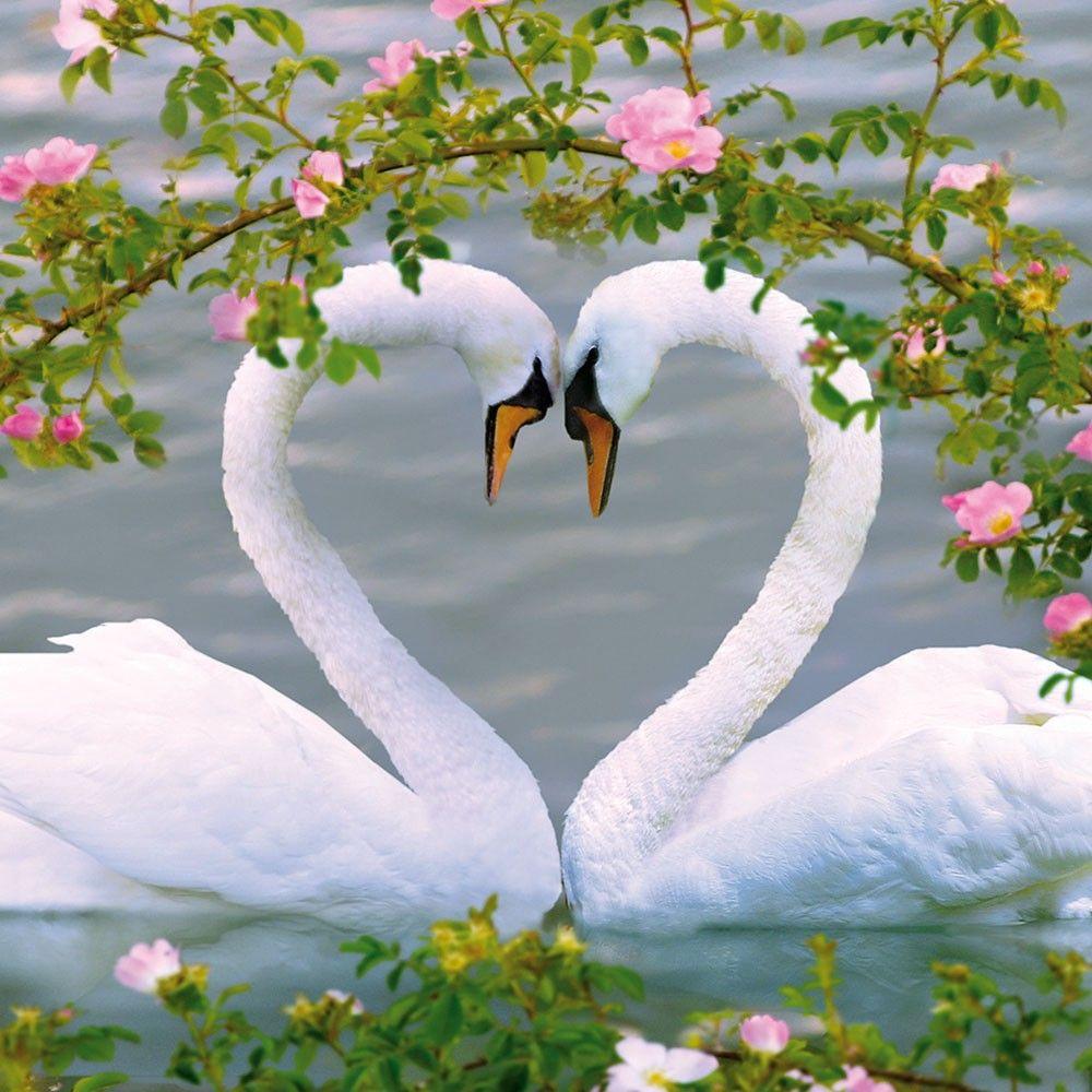 Картинки с днем свадьбы с лебедями