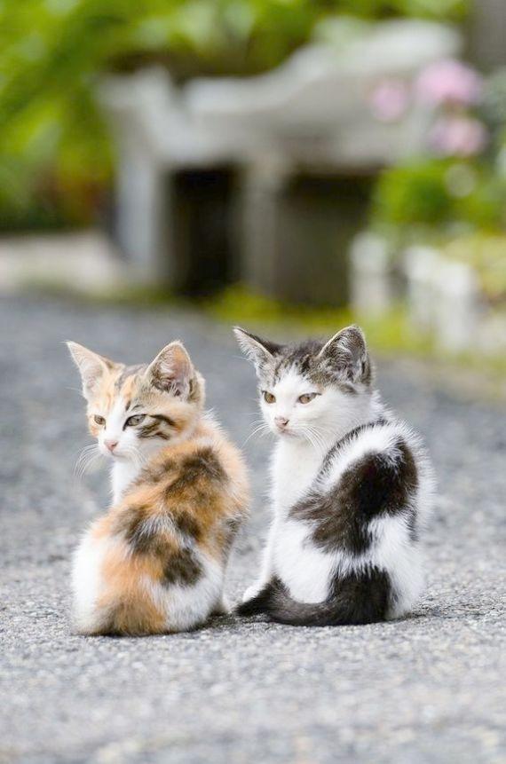Cute Kittens Boy Names Cute Cats Ginger Gatos Bonitos Animais Bonitos Gatos Loucos