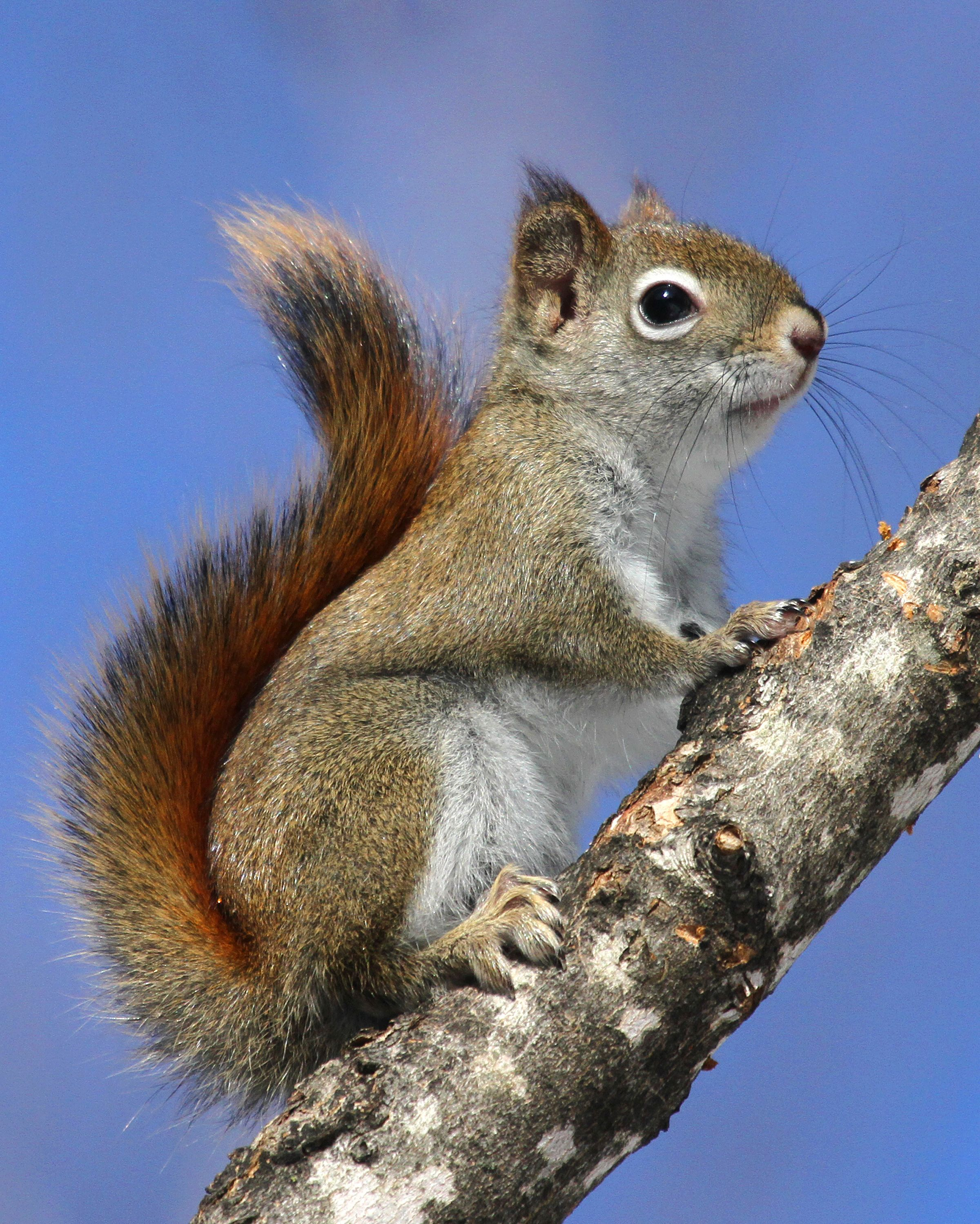 Squirrel that is so cute please check out my website