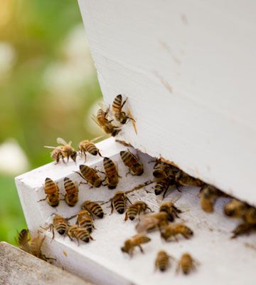 Keeping bees can benefit your garden! Click through to ...