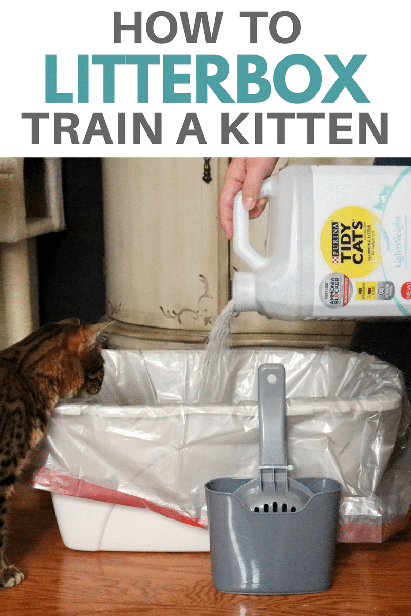 With Some Basic Knowledge Of How To Litterbox Train A Kitten You Can Set Yourself And Your New Cat Up For Litter Training A Kitten Cat Care Tips Cat Training