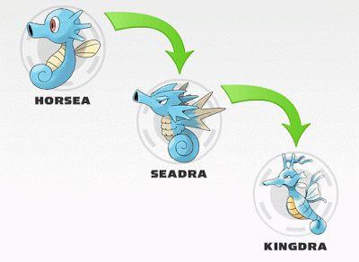 Horsea evolution