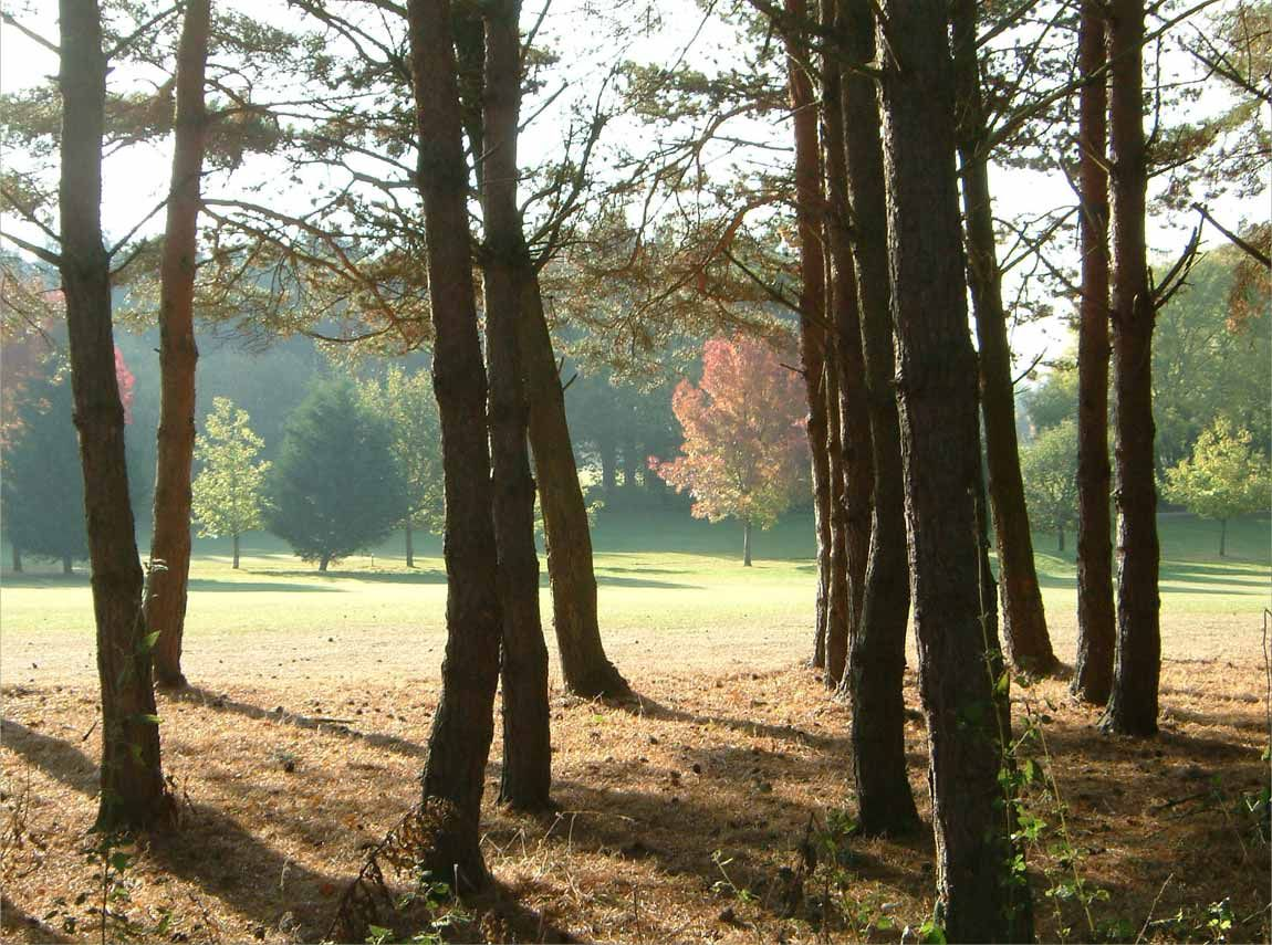 11+ Bramshaw golf course for sale information