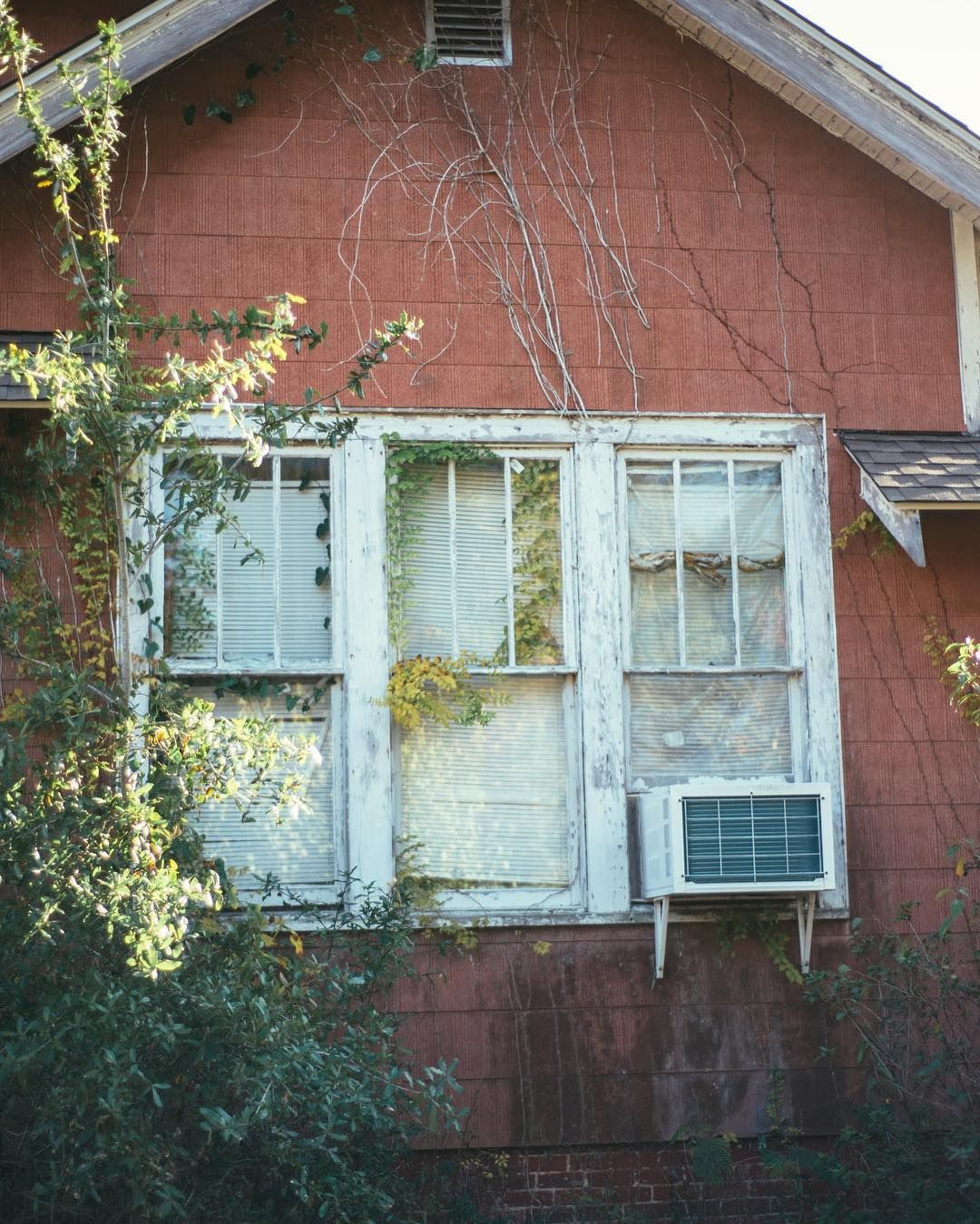 Beautiful Greenery Covers Window In East Hill Neighborhood Of