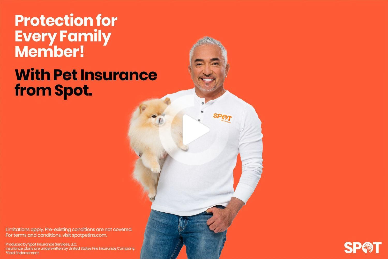 Pet Insurance Plans | Spot Pet Insurance