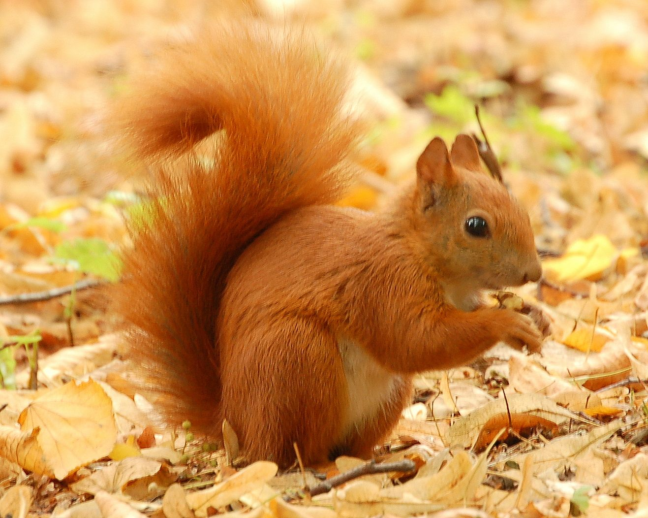 squirrels squirrels are recognizable to very nearly every living soul more than - Pictures Of Squirrels