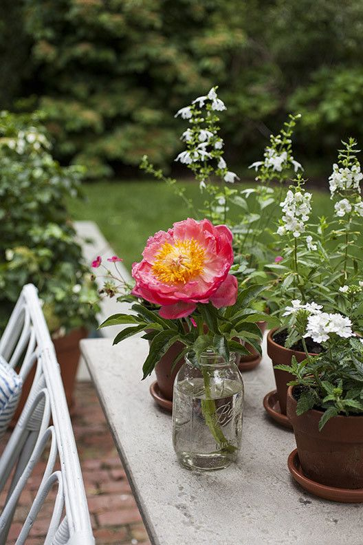 Country Rustic Traditional Garden: A pink flower in a mason jar and small potted plants on a tabletop.