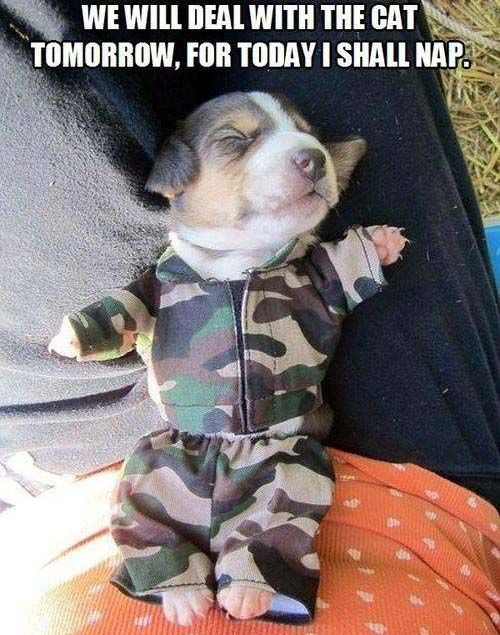 Good Funny Army Adorable Dog - 2d097cca53dd70391033857857db3d9e  Perfect Image Reference_1710065  .jpg
