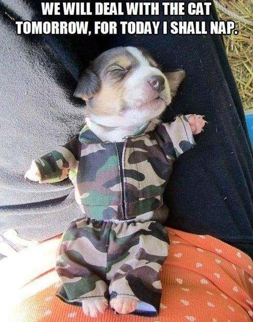 Beautiful Animals Army Adorable Dog - 2d097cca53dd70391033857857db3d9e  Graphic_911612  .jpg