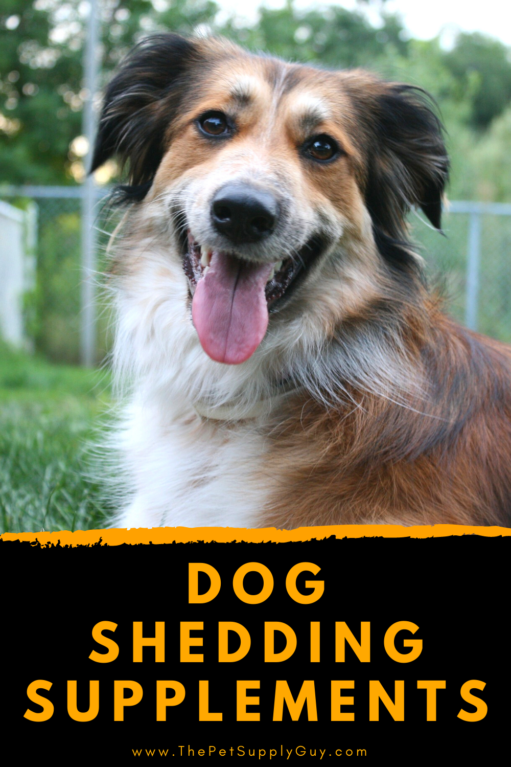 Best Supplements For Shedding Dogs 2020 Ratings Reviews In 2020 Dog Shedding Remedies Dog Shedding Dogs