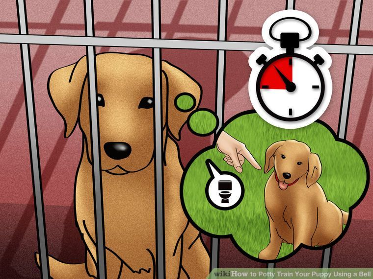 How To Potty Train Your Puppy Using A Bell With Pictures Training Your Puppy Puppy Training Puppies