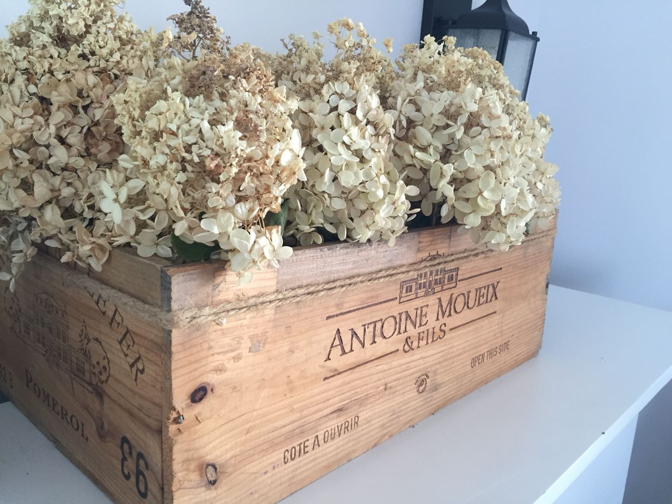 Hydrangea in moueix box, french