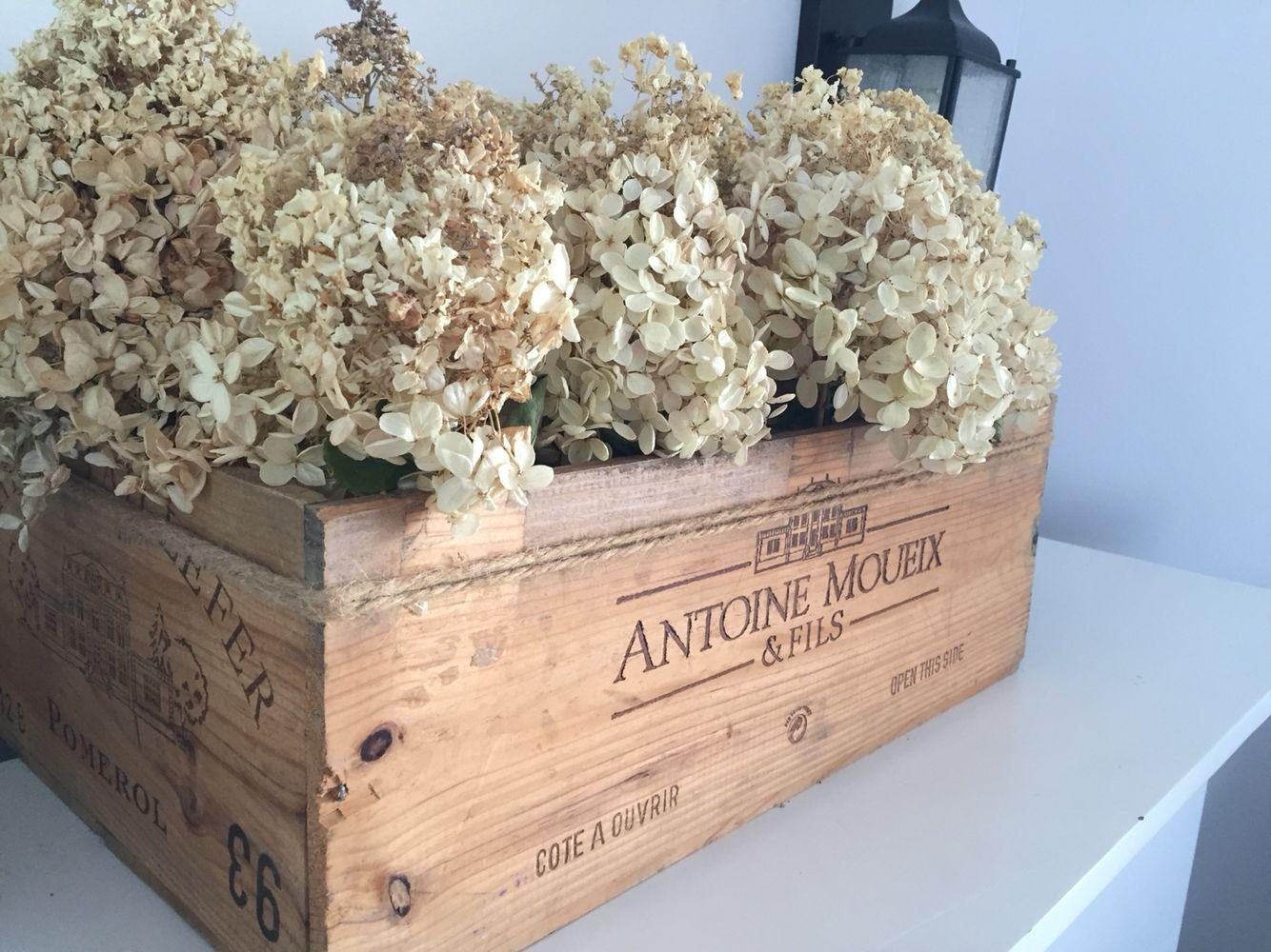 Hydrangea in moueix box, french