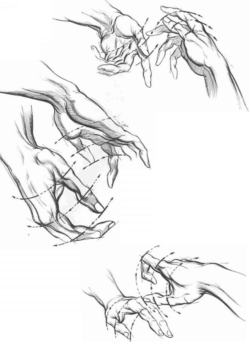 Line Art Realistic Fingers Drawing Pinterest Finger Anatomy