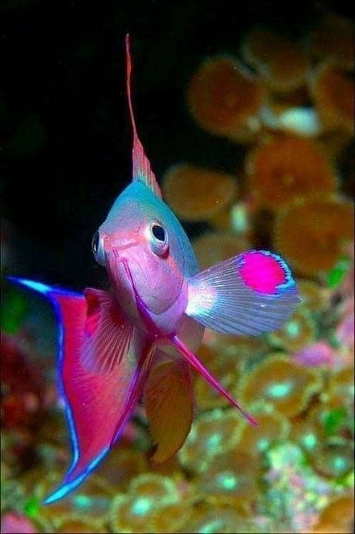 Pin by Iris Massey on Under the Sea | Exotic fish, Colorful