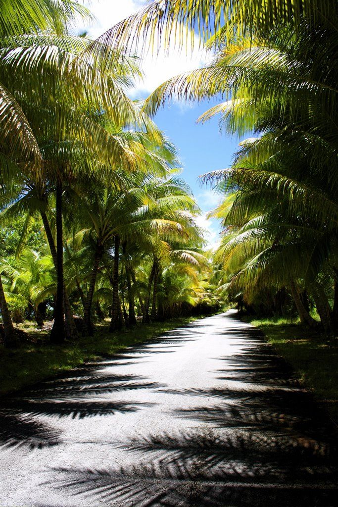 Marshall islands Road to Laura Beach