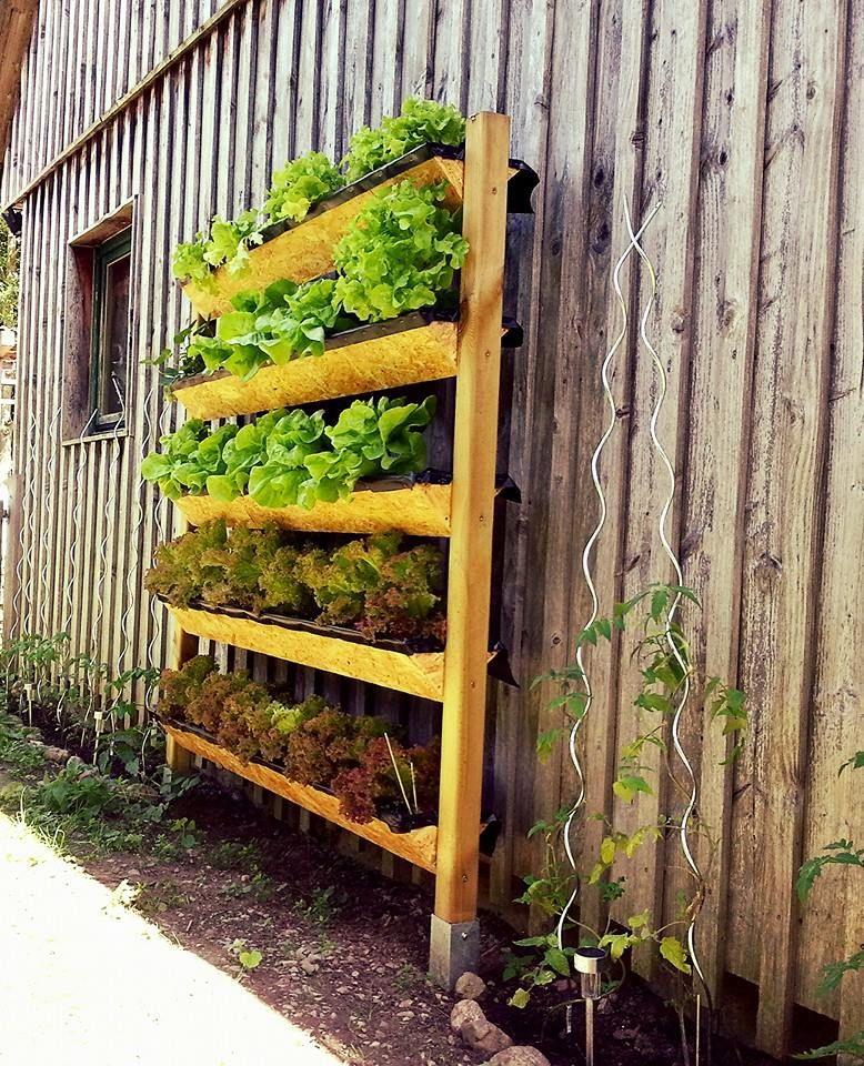 salat mal anders pflanzen garten salate blattgem se pflanzen pinterest pflanzen salat. Black Bedroom Furniture Sets. Home Design Ideas