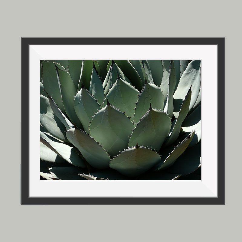 cactus poster, leuke poster om bijvoorbeeld op te hangen in de ...