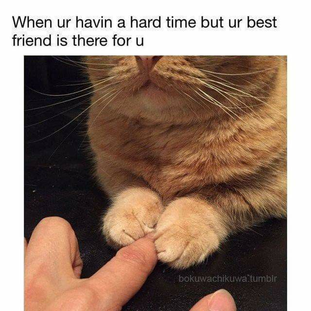Pin By Rk Lokesh On My Inner Crazy Cat Lady Best Cat Memes Cat Memes Cute Funny Animals