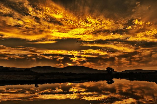 Gold on the Ceiling | Coyote Hills RP, Fremont, CA