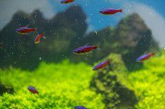 fisk malmö malmömuseer malmöhusslott aquarium fish