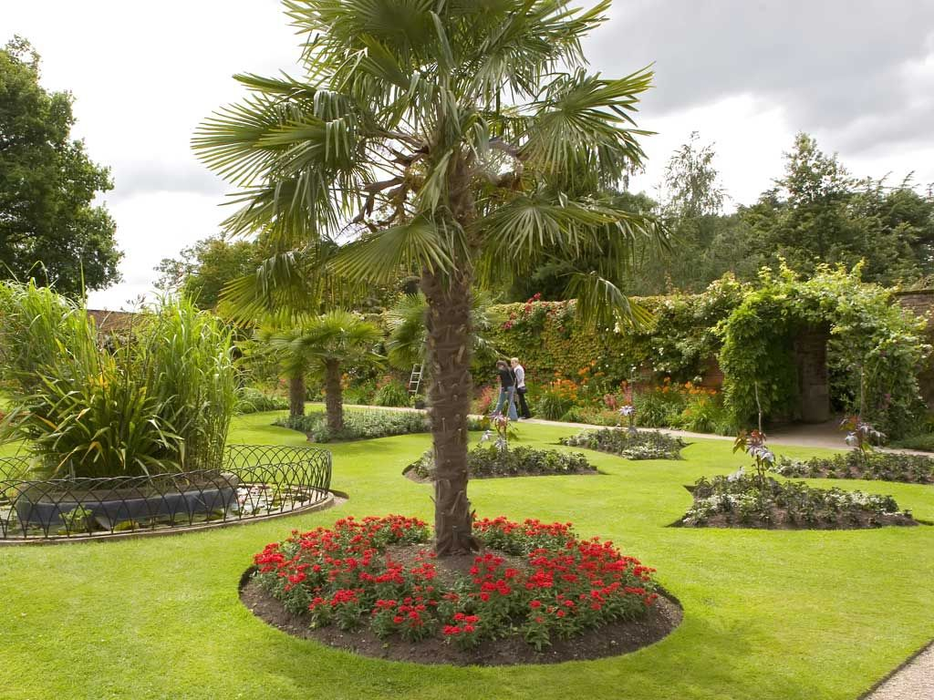 Different trees of the world different types of beautiful palm trees to decorate your garden for A gardener is planting two types of trees